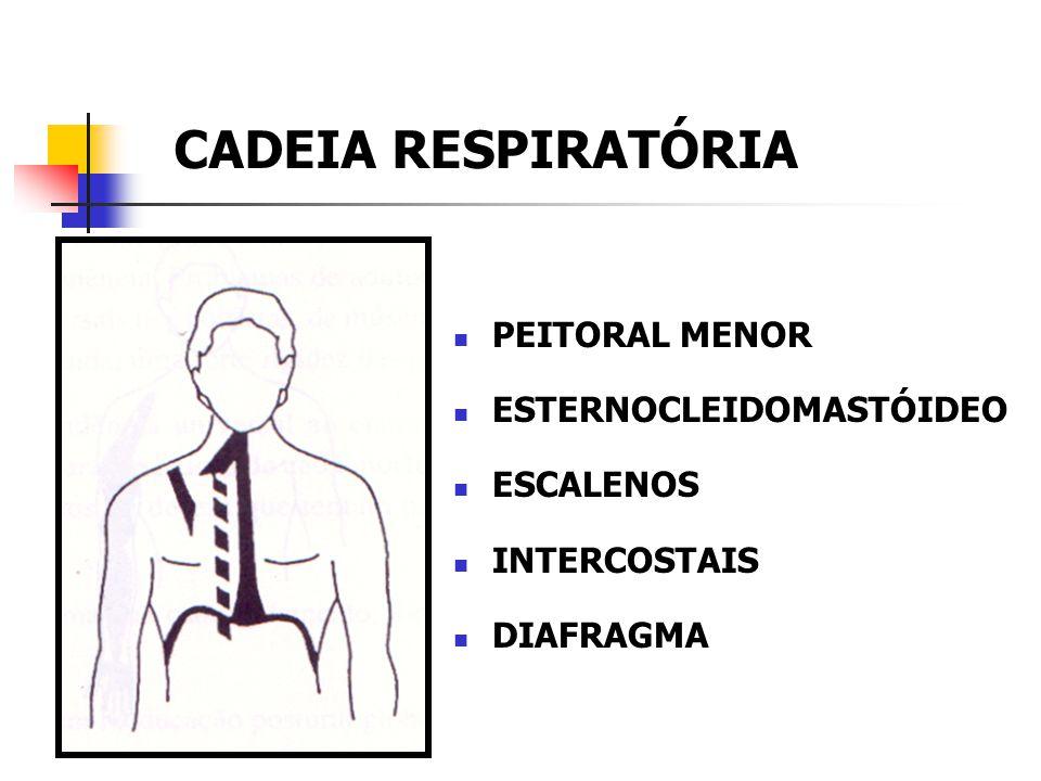 CADEIA RESPIRATÓRIA PEITORAL MENOR ESTERNOCLEIDOMASTÓIDEO ESCALENOS