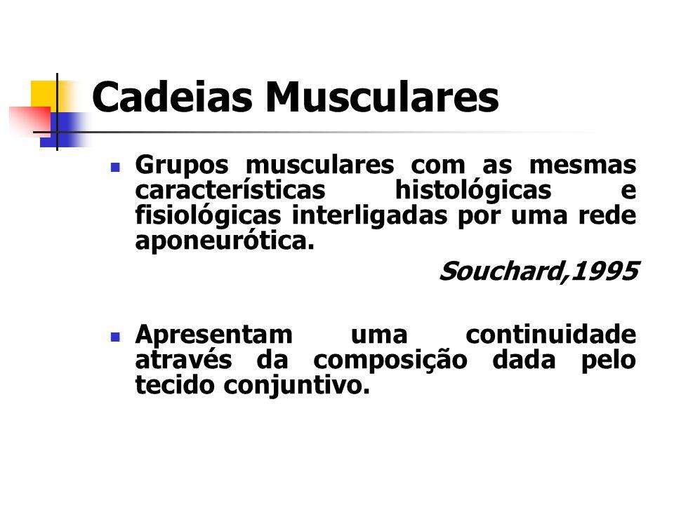 Cadeias Musculares Grupos musculares com as mesmas características histológicas e fisiológicas interligadas por uma rede aponeurótica.