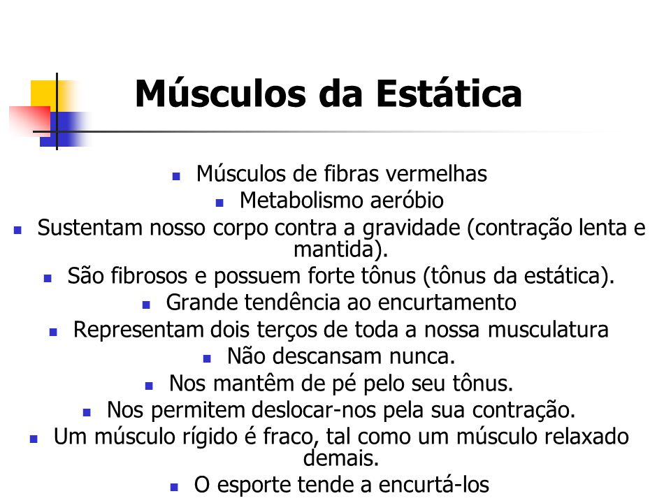 Músculos da Estática Músculos de fibras vermelhas Metabolismo aeróbio
