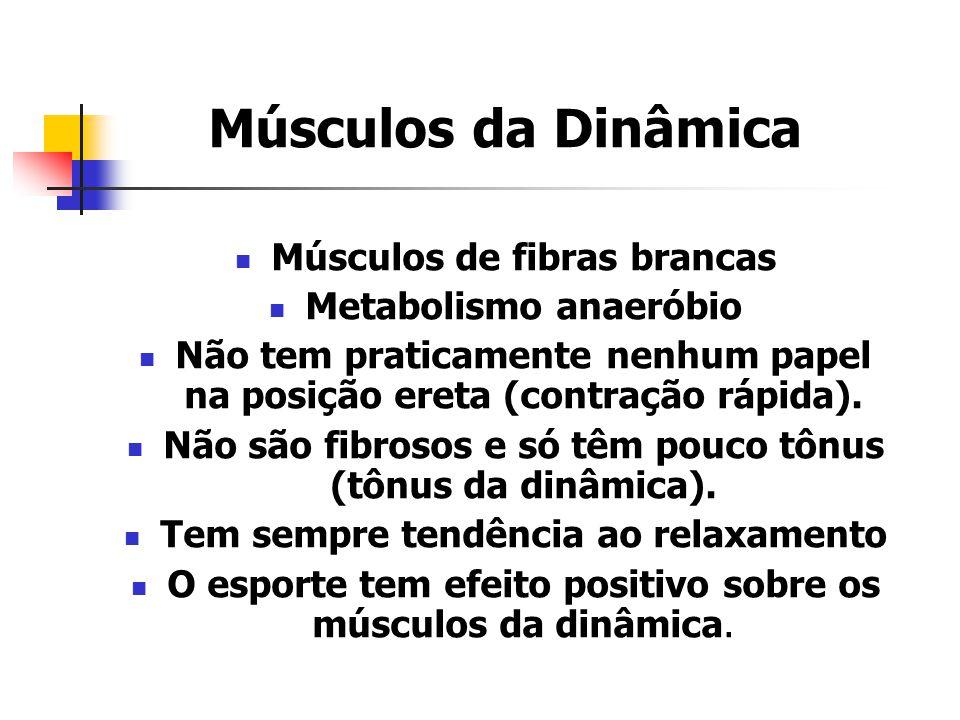 Músculos da Dinâmica Músculos de fibras brancas Metabolismo anaeróbio