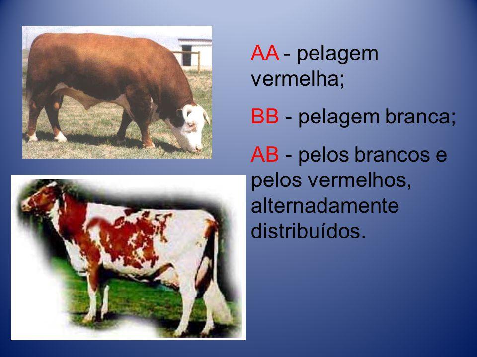 AA - pelagem vermelha; BB - pelagem branca; AB - pelos brancos e pelos vermelhos, alternadamente distribuídos.