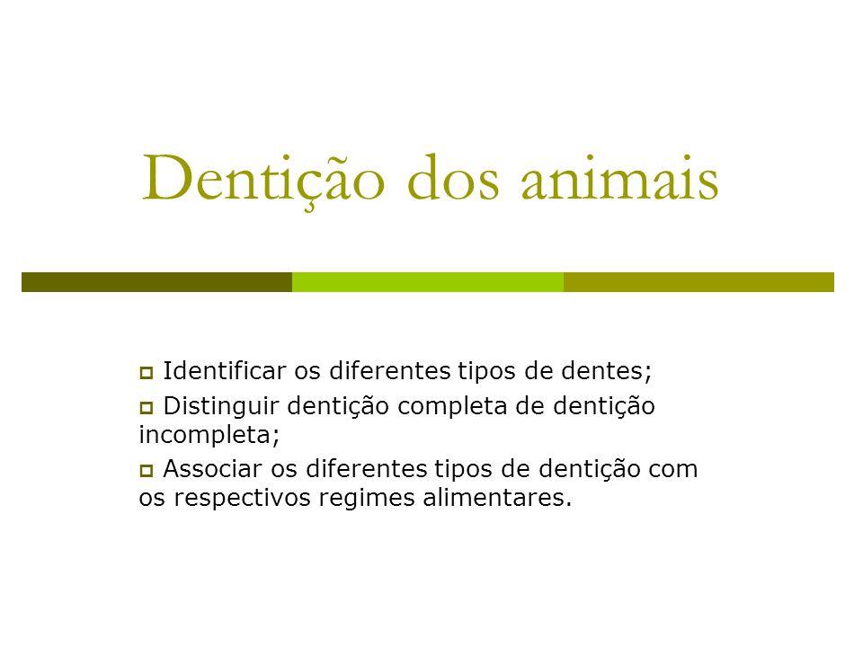 Dentição dos animais Identificar os diferentes tipos de dentes;