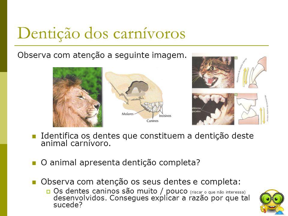 Dentição dos carnívoros
