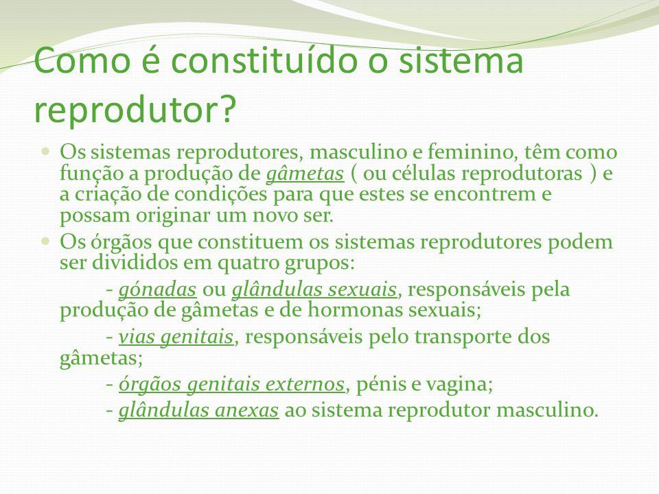 Como é constituído o sistema reprodutor