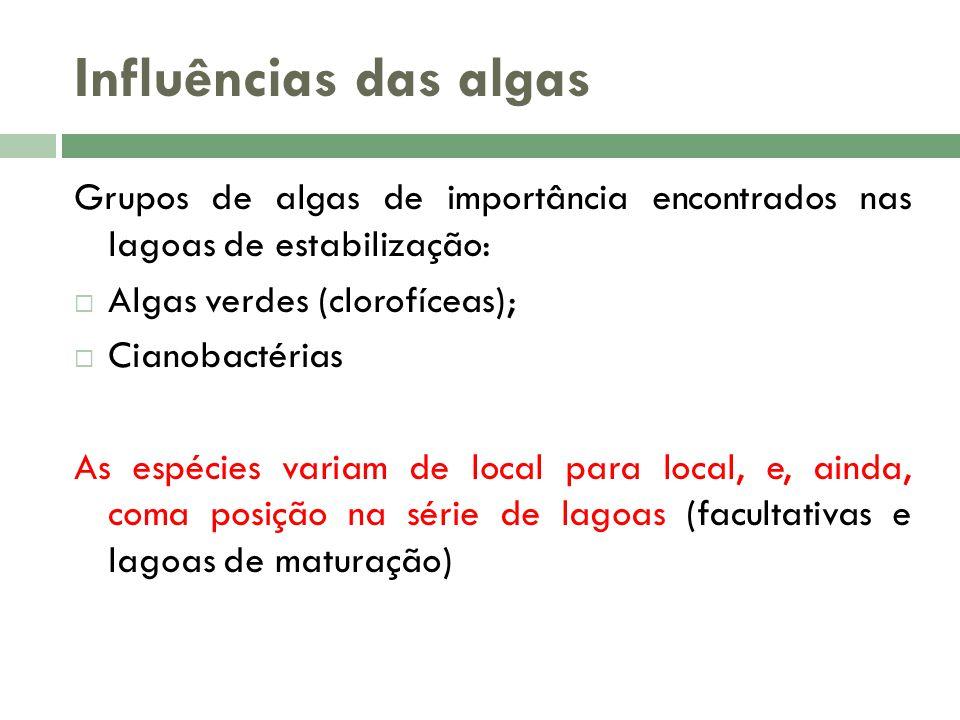 Influências das algas Grupos de algas de importância encontrados nas lagoas de estabilização: Algas verdes (clorofíceas);