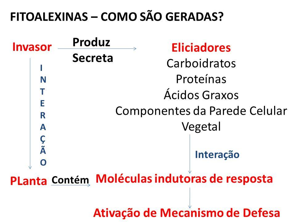 Componentes da Parede Celular Vegetal