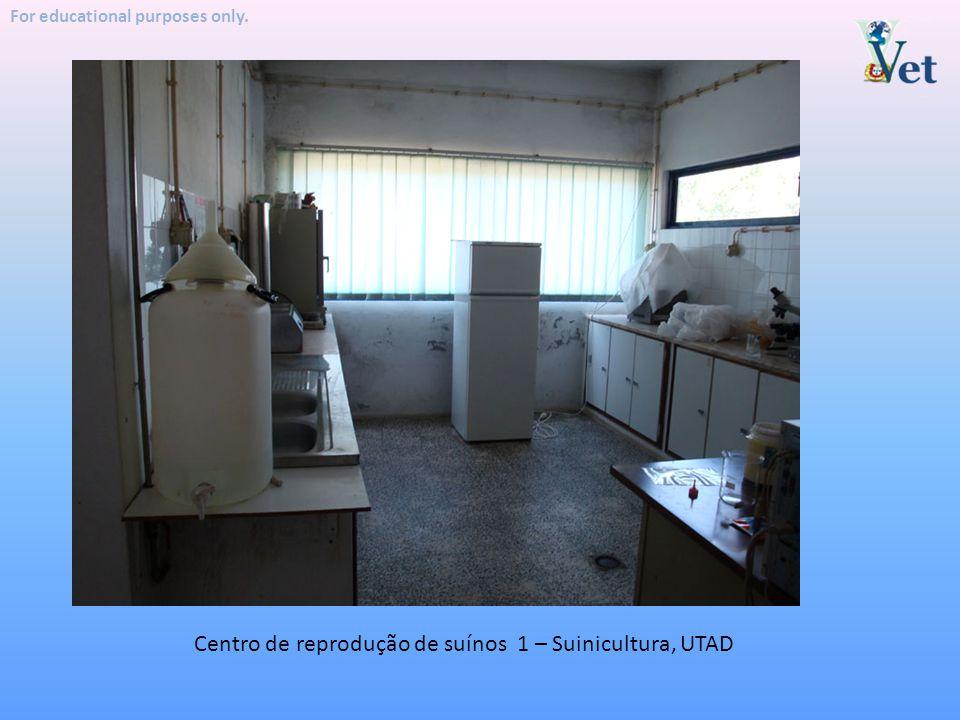 Centro de reprodução de suínos 1 – Suinicultura, UTAD