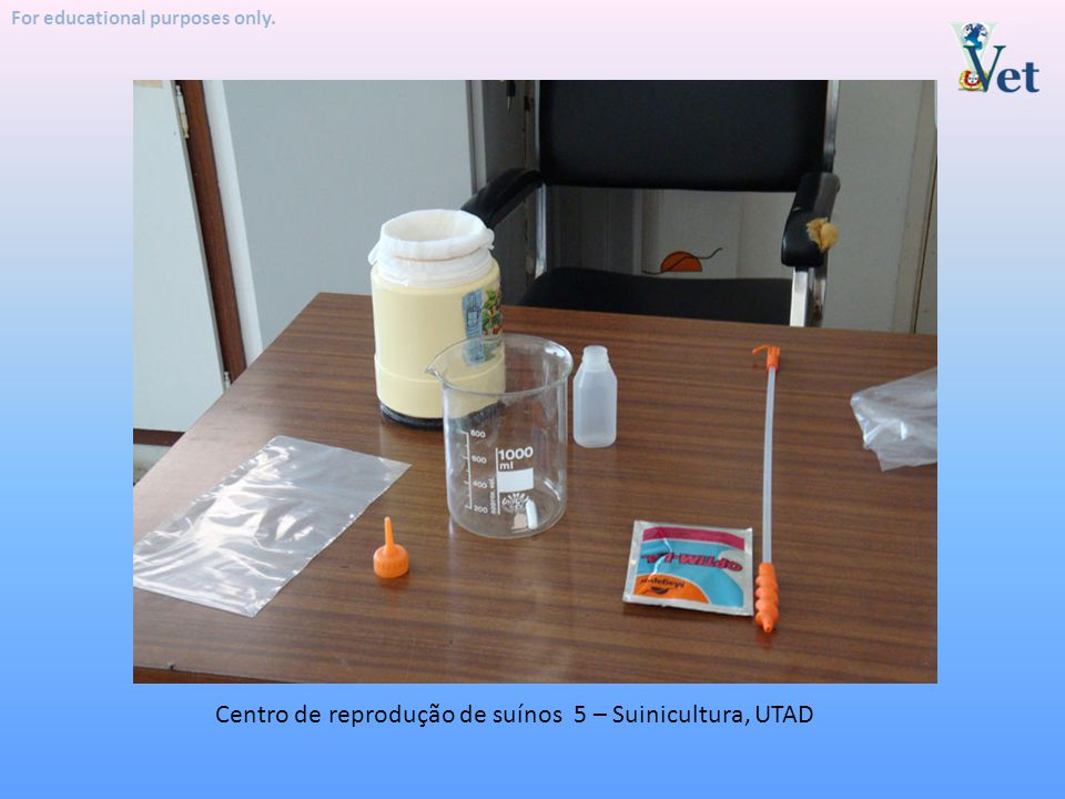 Centro de reprodução de suínos 5 – Suinicultura, UTAD