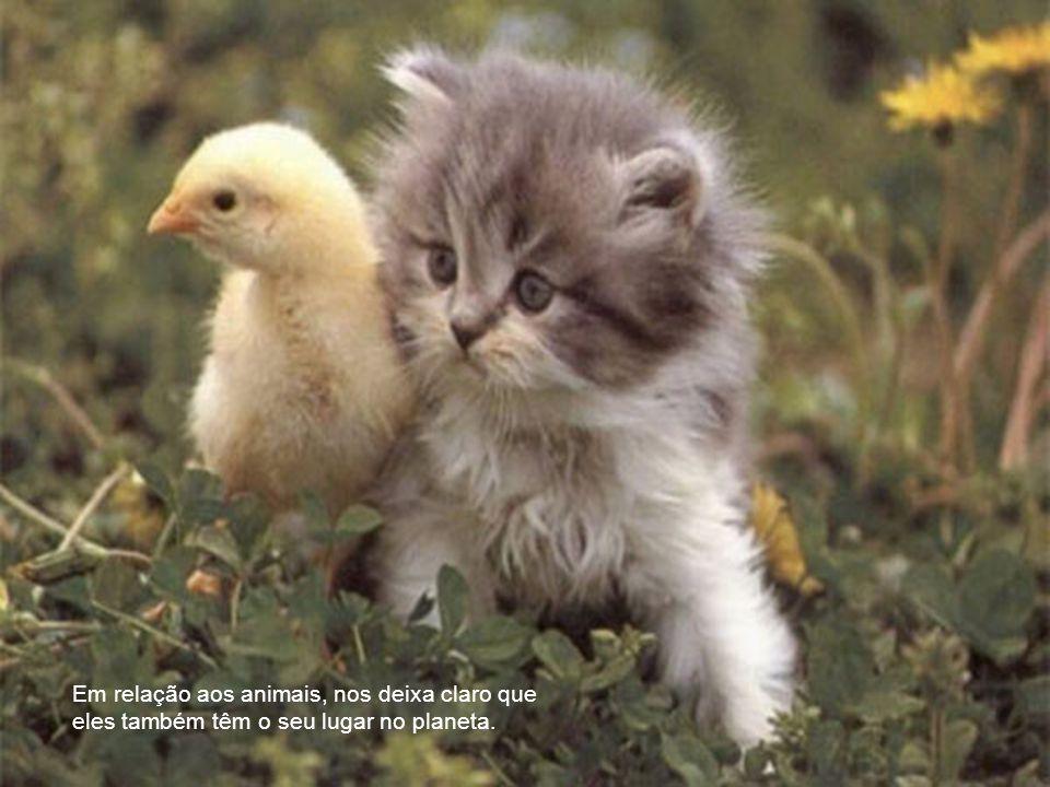 Em relação aos animais, nos deixa claro que eles também têm o seu lugar no planeta.