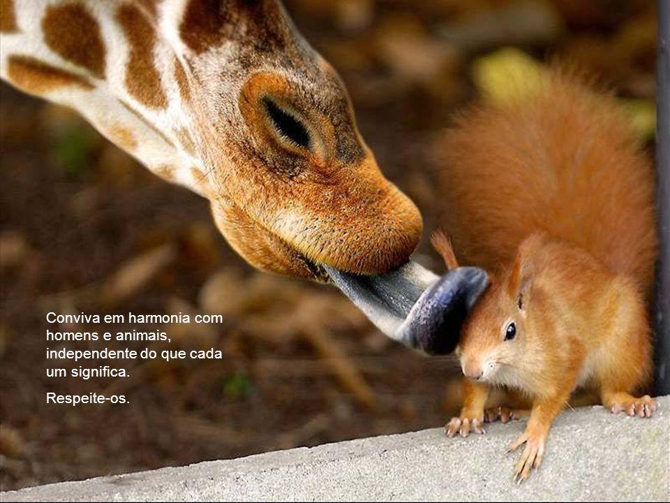 Conviva em harmonia com homens e animais, independente do que cada um significa.
