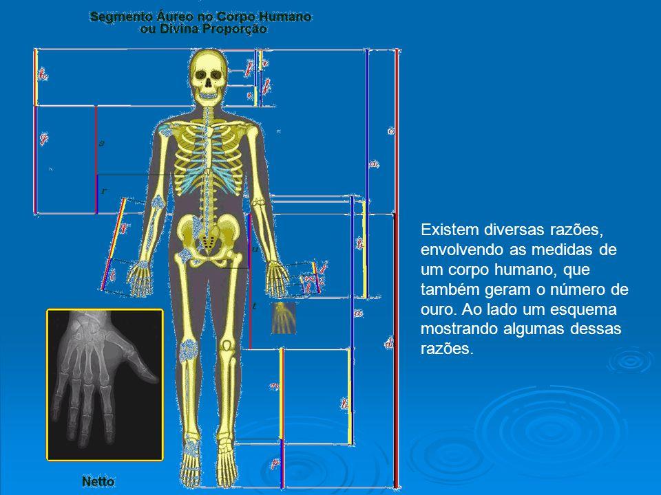 Existem diversas razões, envolvendo as medidas de um corpo humano, que também geram o número de ouro.