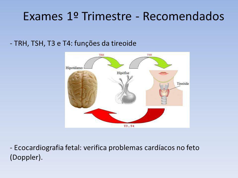 Exames 1º Trimestre - Recomendados
