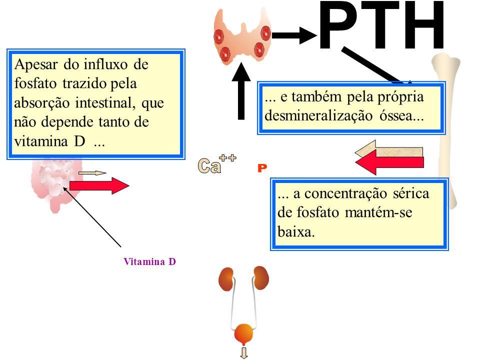 PTH Apesar do influxo de fosfato trazido pela absorção intestinal, que não depende tanto de vitamina D ...