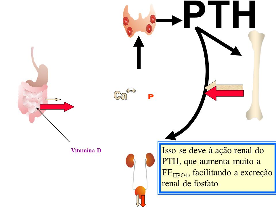 PTH Ca. ++ P. Isso se deve à ação renal do PTH, que aumenta muito a FEHPO4, facilitando a excreção renal de fosfato.