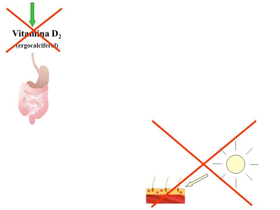 Vitamina D2 (ergocalciferol)
