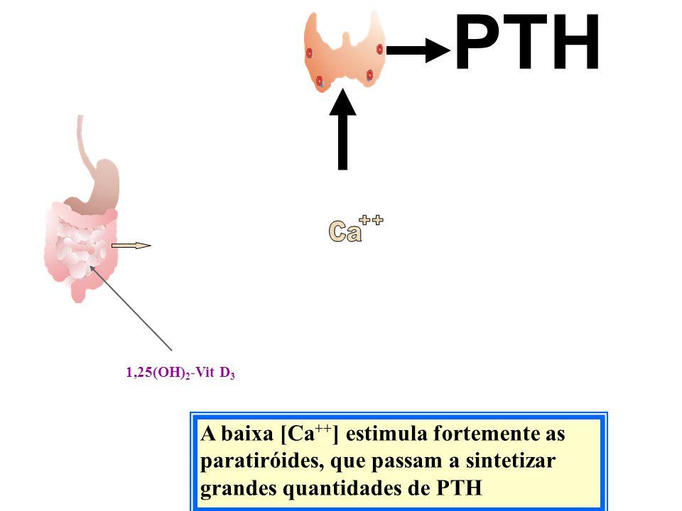 PTH Ca. ++ 1,25(OH)2-Vit D3.