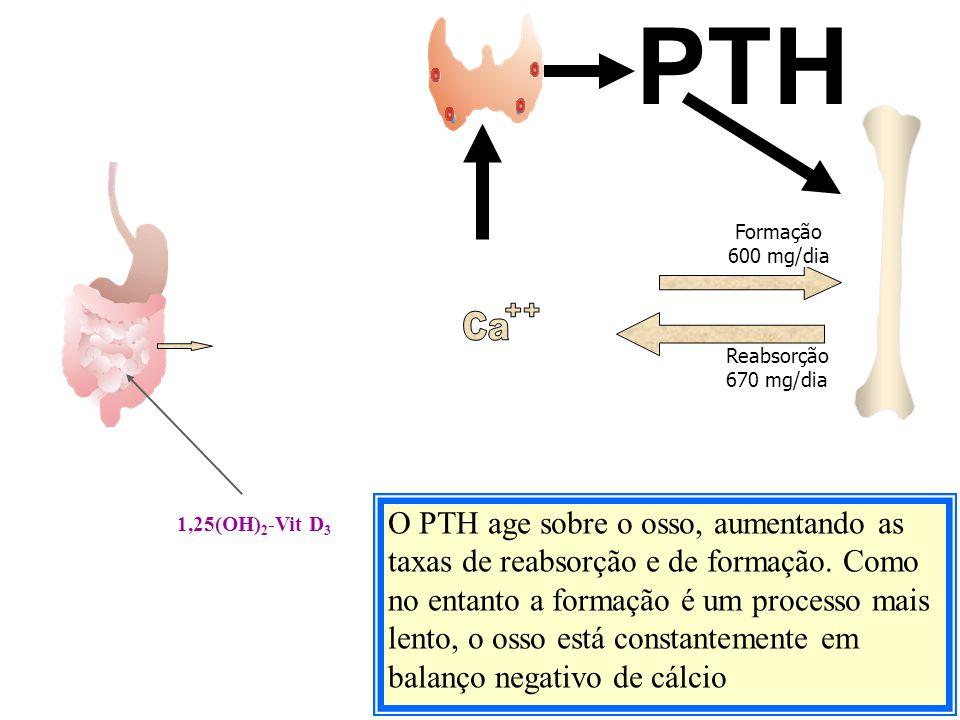 PTH Formação. 600 mg/dia. Ca. ++ Reabsorção 670 mg/dia.