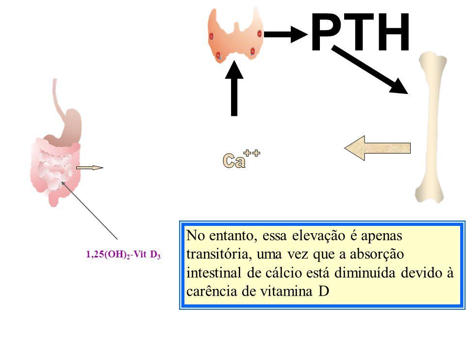 PTH Ca. ++ Ca. ++ Ca. ++