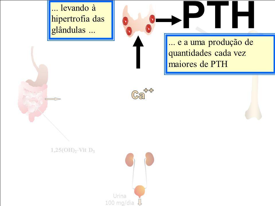 PTH ++ Ca ... levando à hipertrofia das glândulas ...
