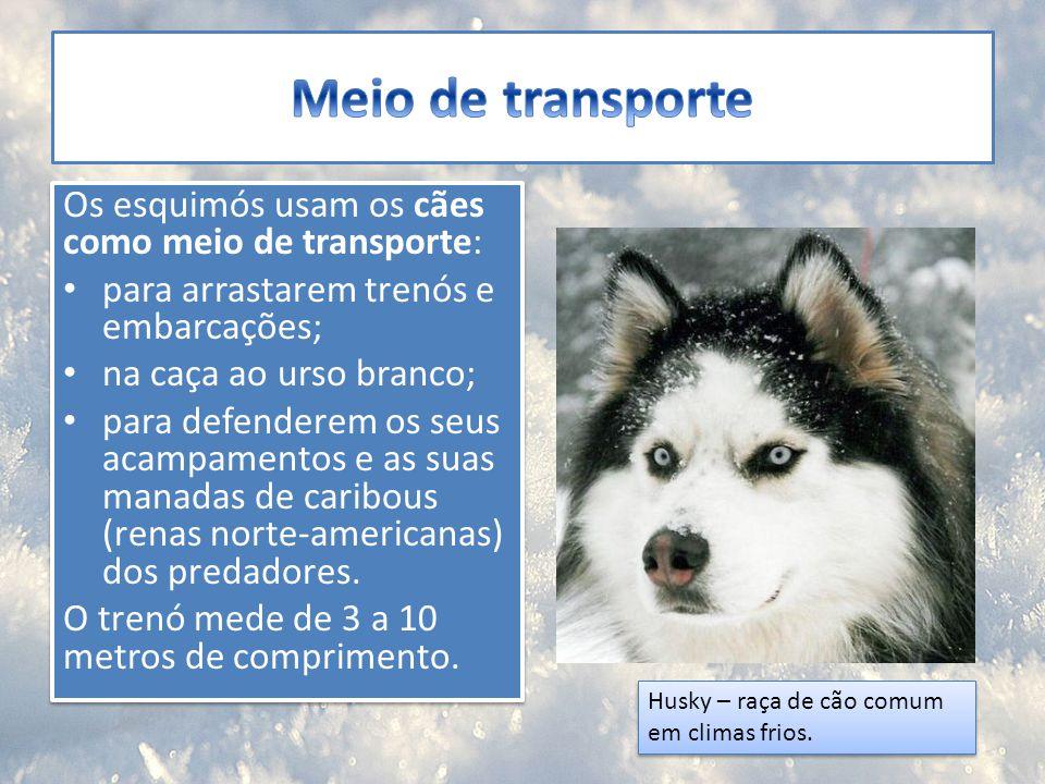 Meio de transporte Os esquimós usam os cães como meio de transporte: