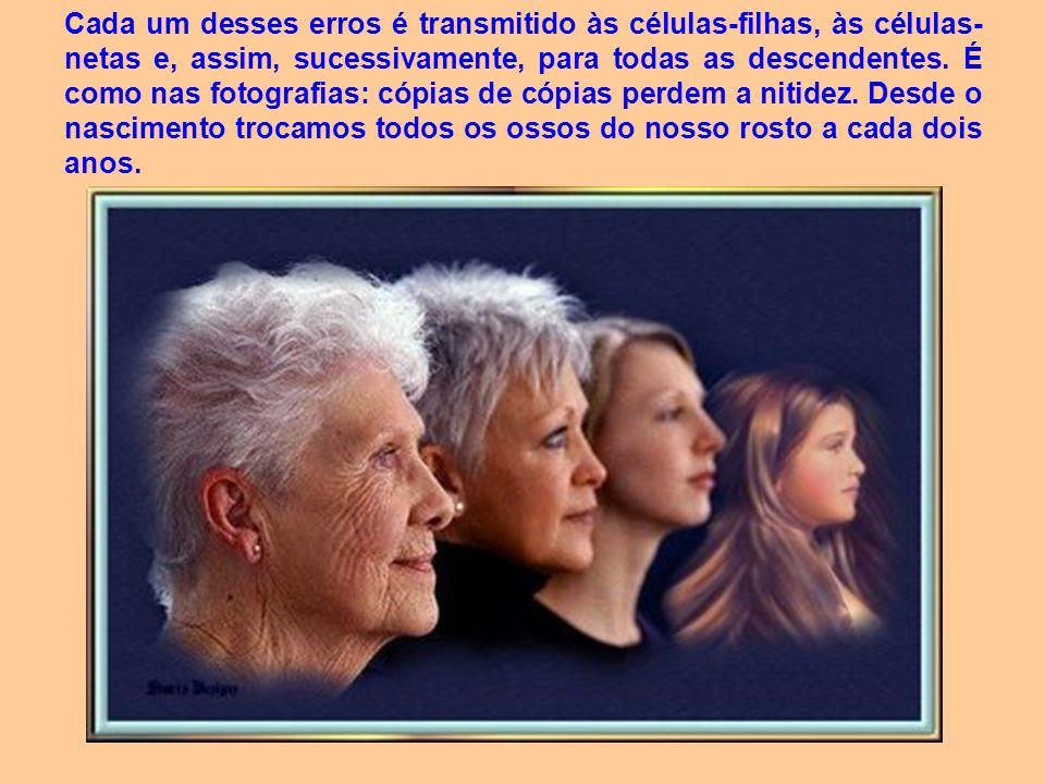 Cada um desses erros é transmitido às células-filhas, às células-netas e, assim, sucessivamente, para todas as descendentes.