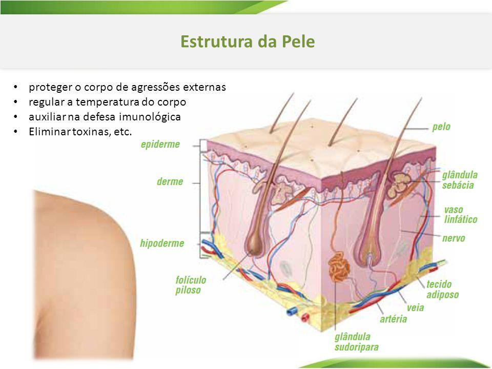 Estrutura da Pele proteger o corpo de agressões externas