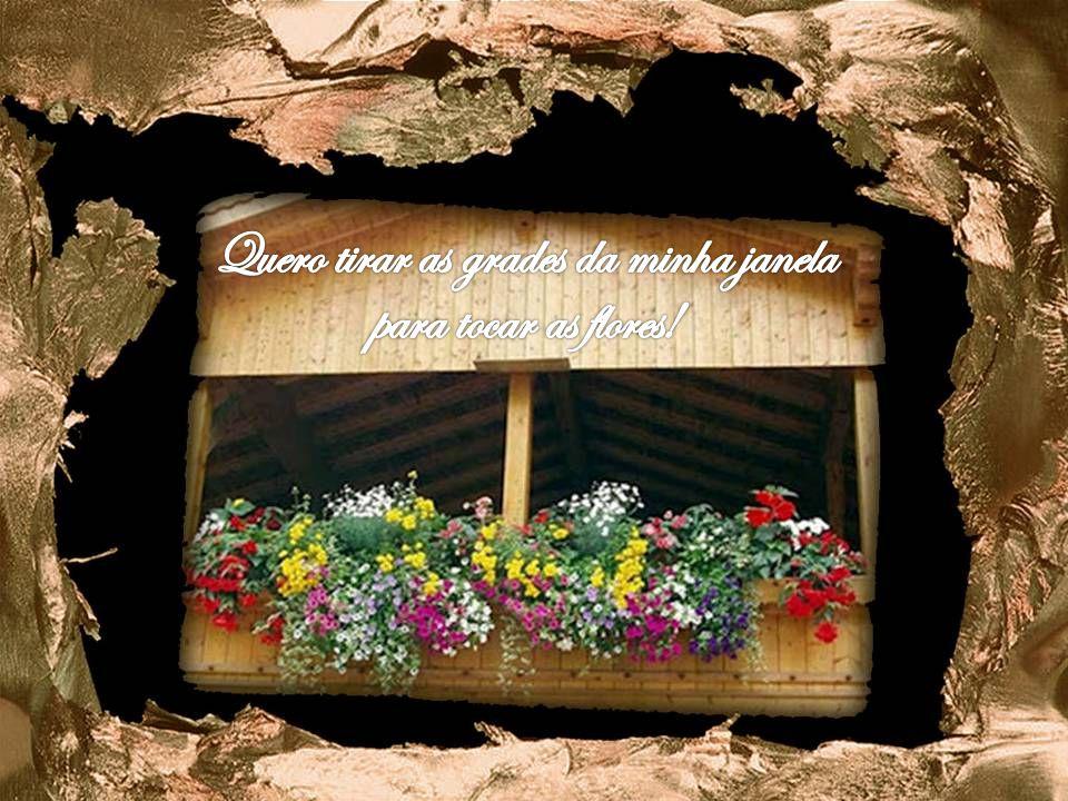 Quero tirar as grades da minha janela para tocar as flores!