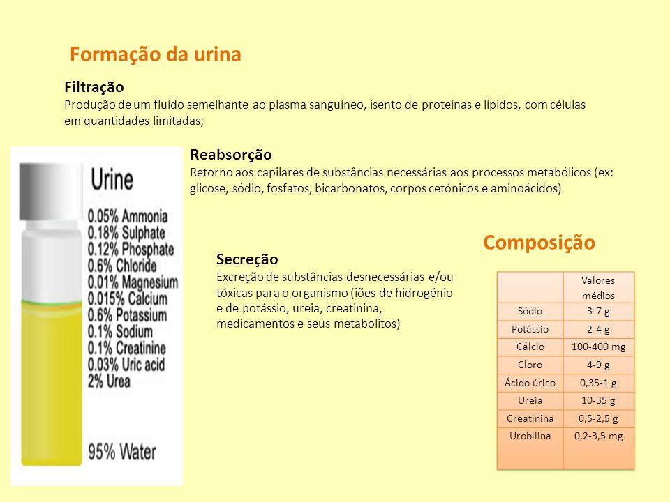 Formação da urina Composição Filtração Reabsorção Secreção