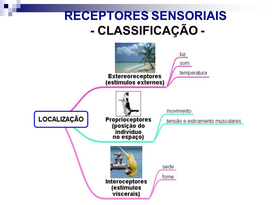 RECEPTORES SENSORIAIS - CLASSIFICAÇÃO -