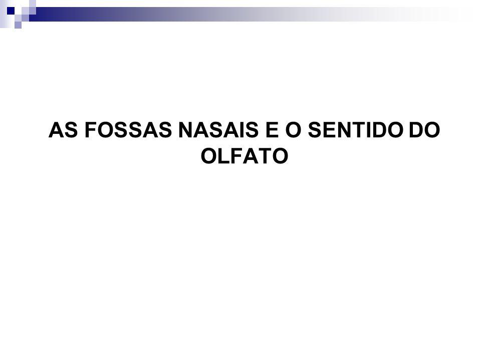 AS FOSSAS NASAIS E O SENTIDO DO OLFATO