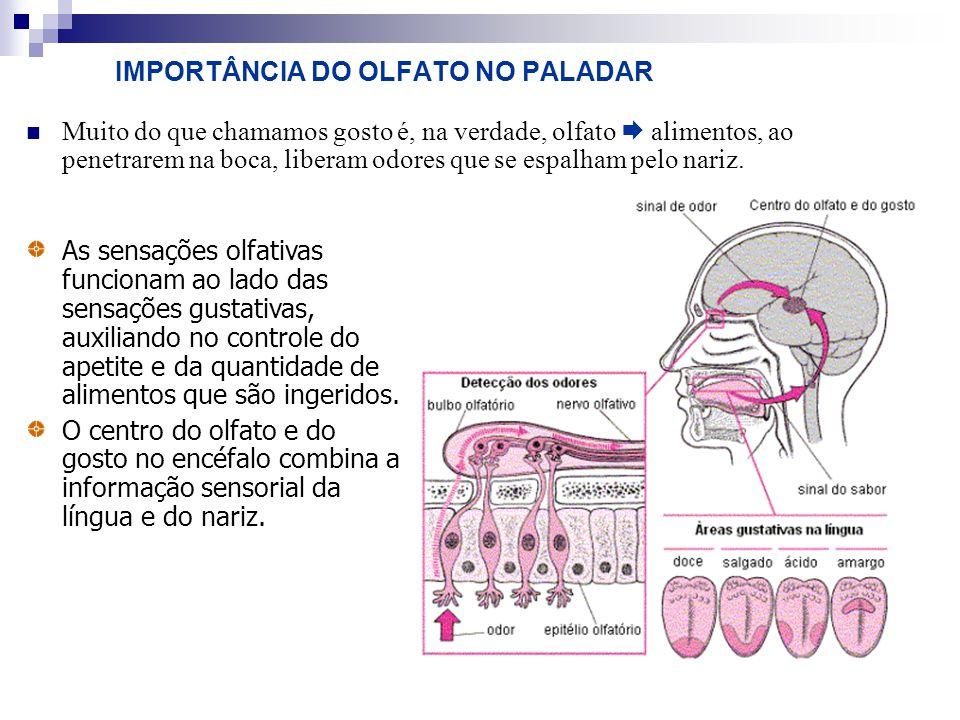 IMPORTÂNCIA DO OLFATO NO PALADAR