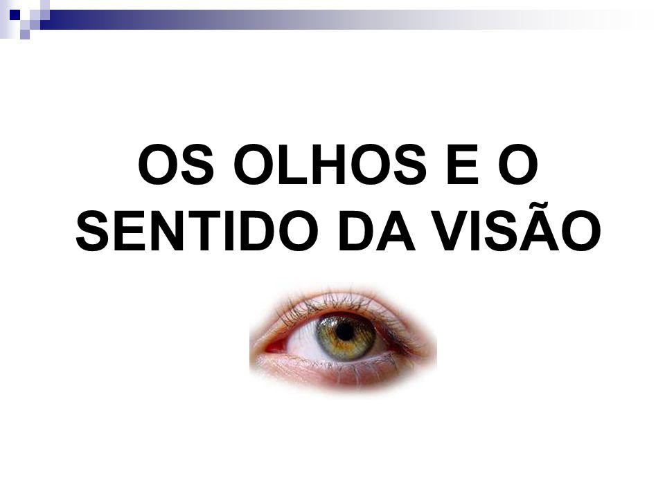 OS OLHOS E O SENTIDO DA VISÃO