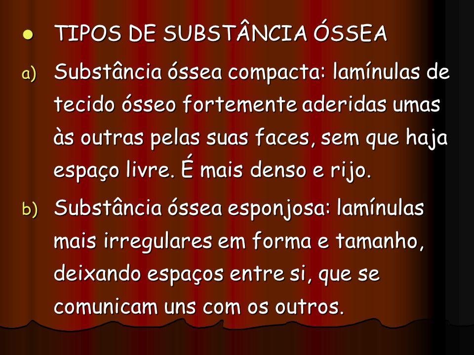 TIPOS DE SUBSTÂNCIA ÓSSEA