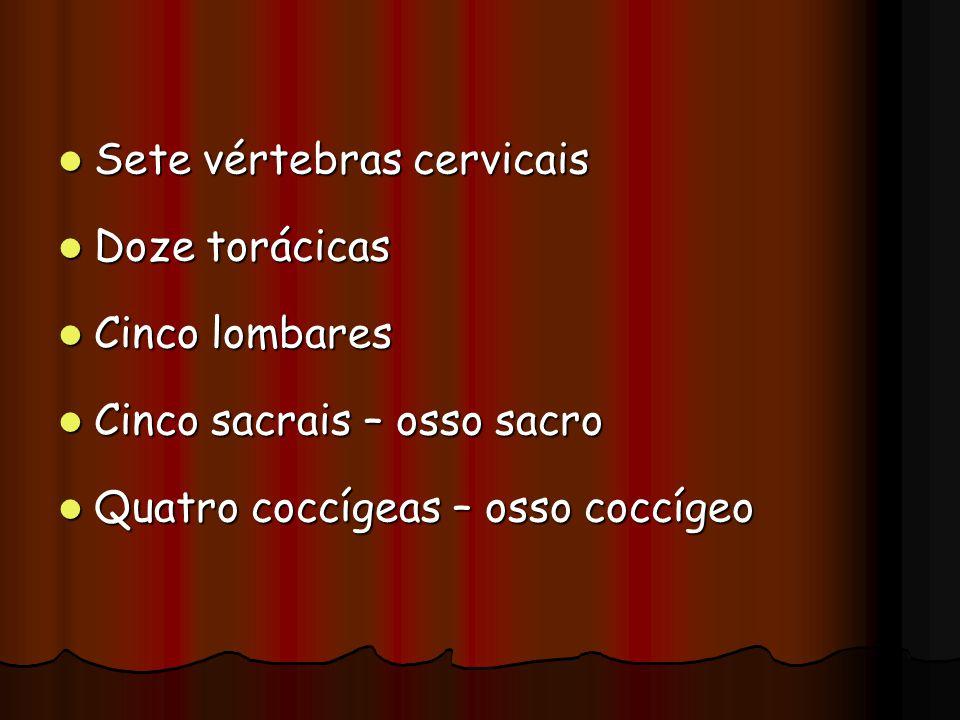 Sete vértebras cervicais