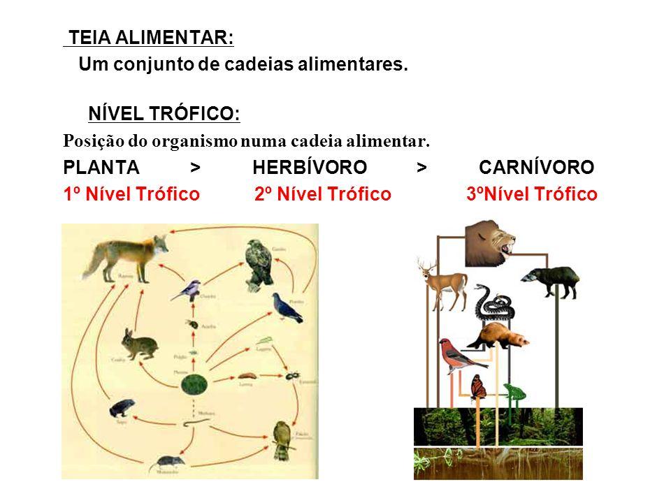 TEIA ALIMENTAR: Um conjunto de cadeias alimentares. NÍVEL TRÓFICO: Posição do organismo numa cadeia alimentar.