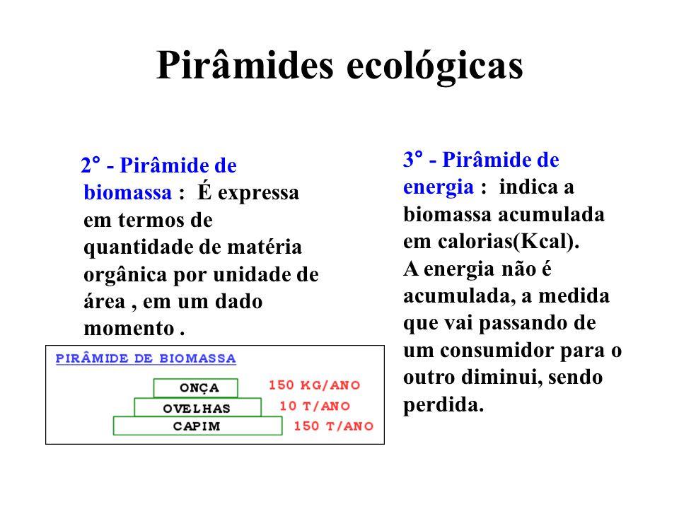 Pirâmides ecológicas 3° - Pirâmide de energia : indica a biomassa acumulada em calorias(Kcal).