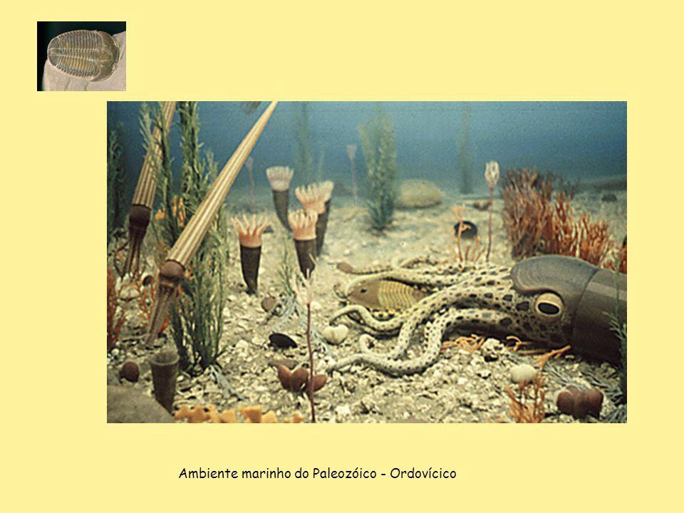 Ambiente marinho do Paleozóico - Ordovícico