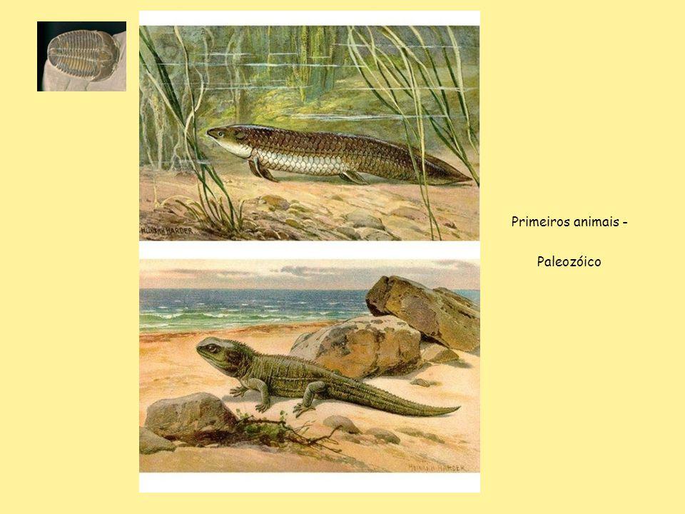 Primeiros animais - Paleozóico