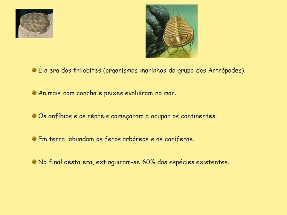 É a era dos trilobites (organismos marinhos do grupo dos Artrópodes).