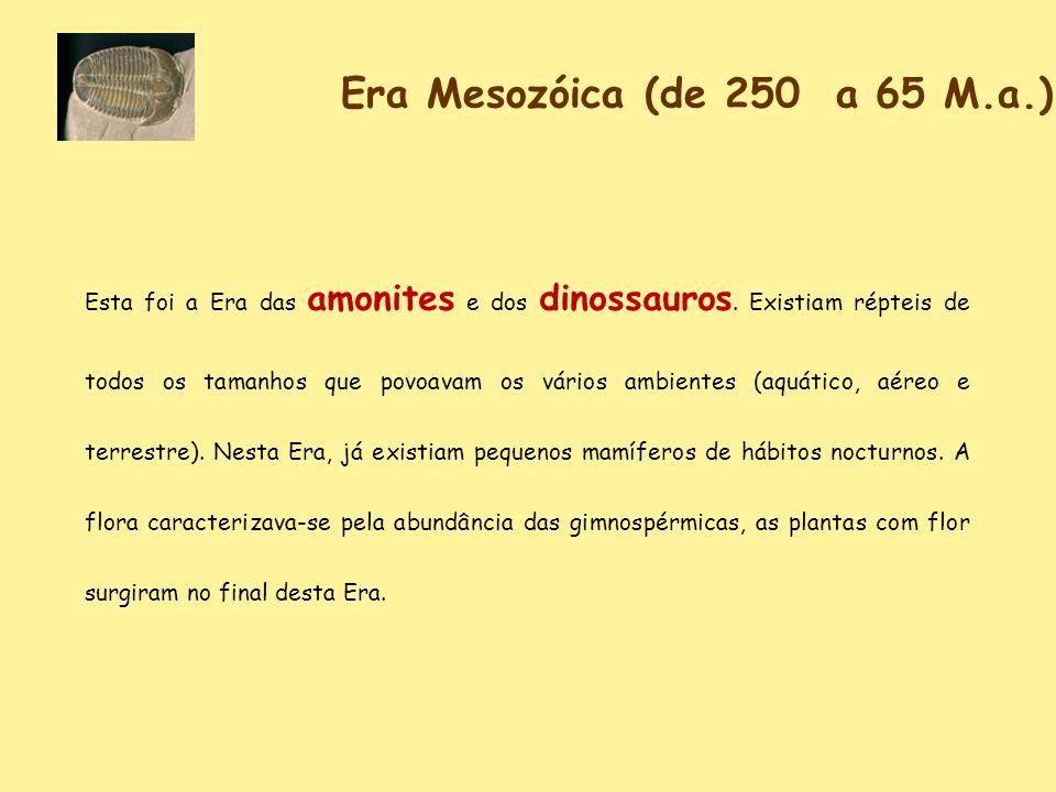 Era Mesozóica (de 250 a 65 M.a.)