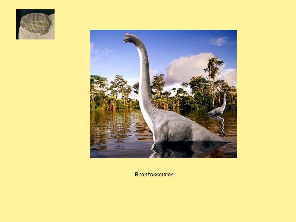 Brontossauros