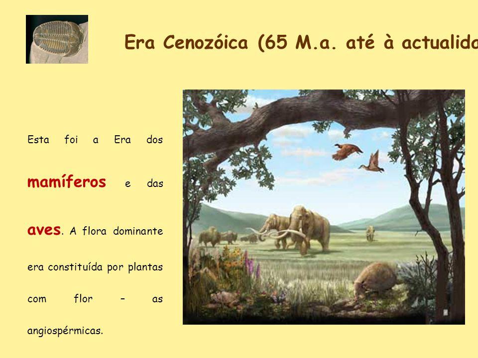 Era Cenozóica (65 M.a. até à actualidade)