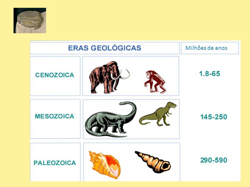 Milhões de anos