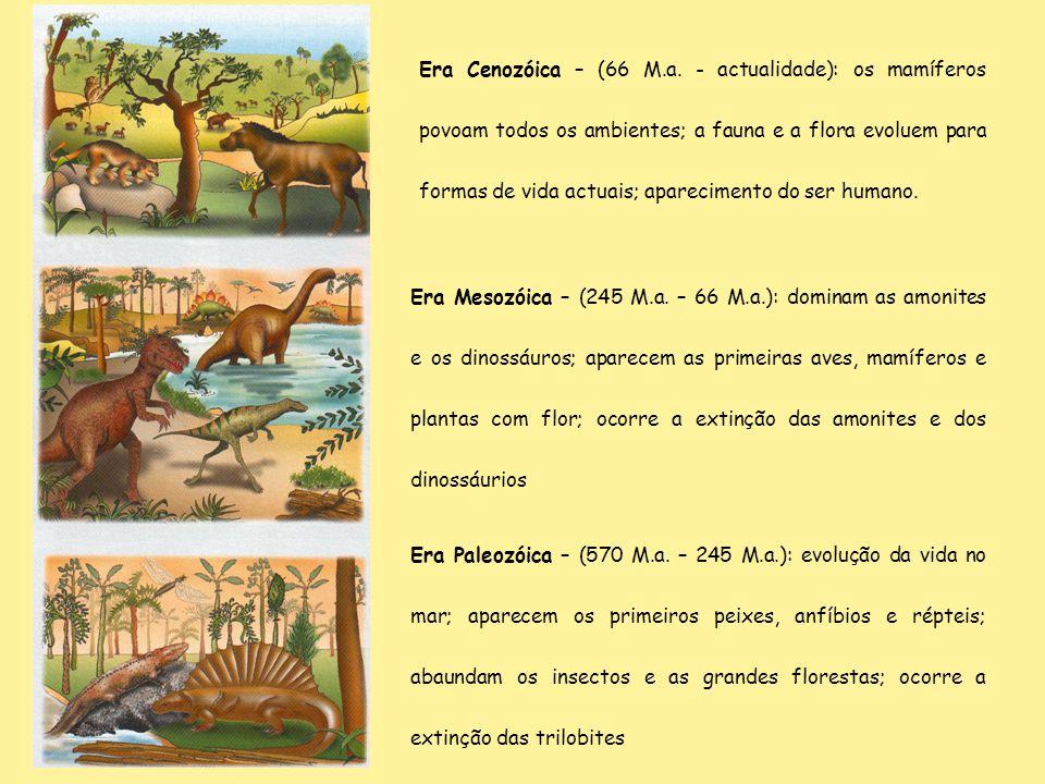 Era Cenozóica – (66 M.a. - actualidade): os mamíferos povoam todos os ambientes; a fauna e a flora evoluem para formas de vida actuais; aparecimento do ser humano.