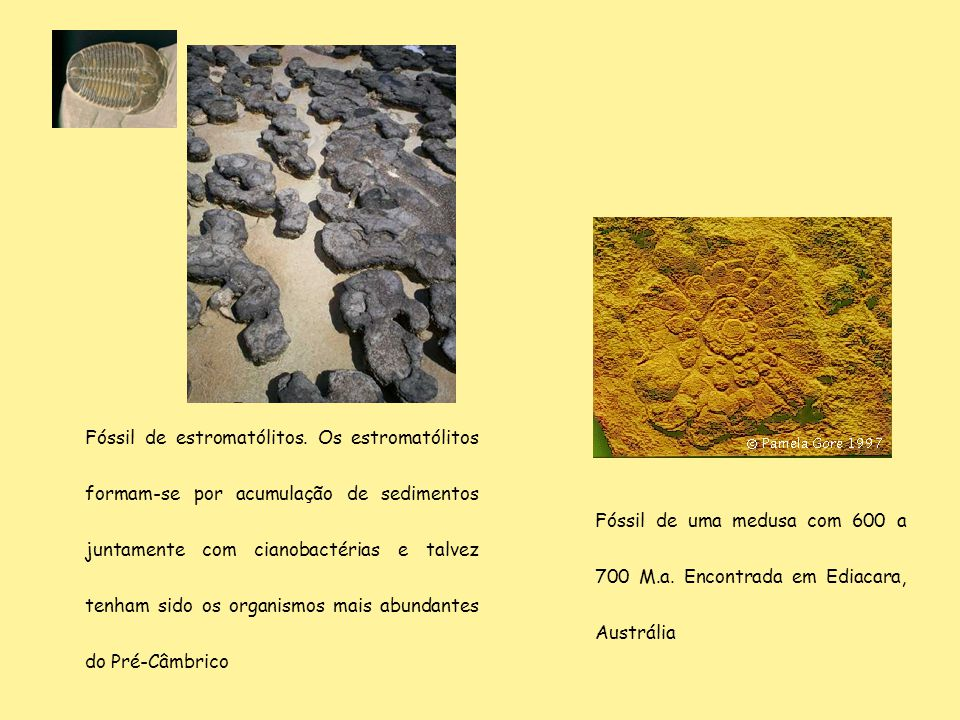 Fóssil de estromatólitos