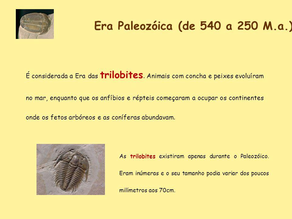 Era Paleozóica (de 540 a 250 M.a.)