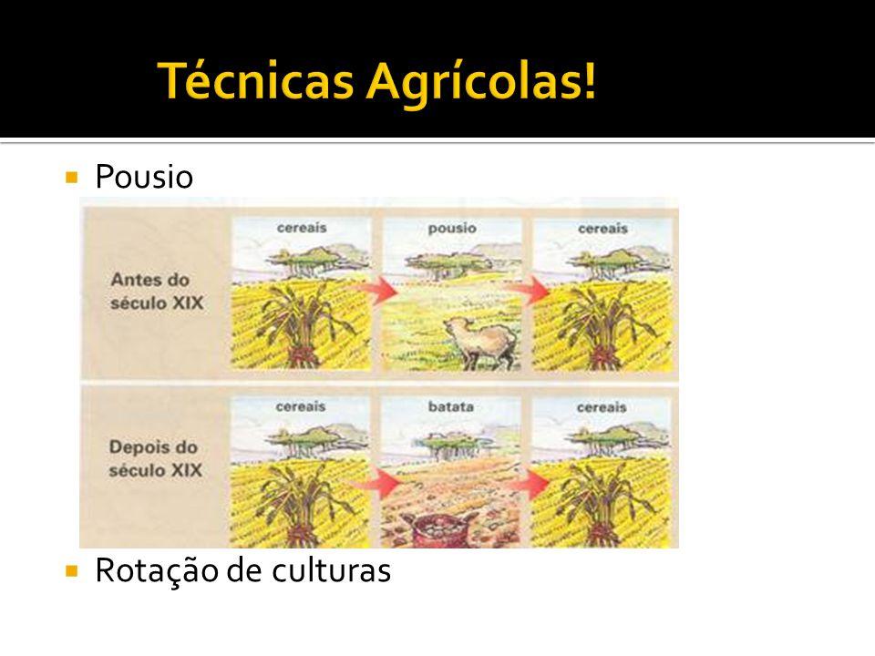 Técnicas Agrícolas! Pousio Rotação de culturas