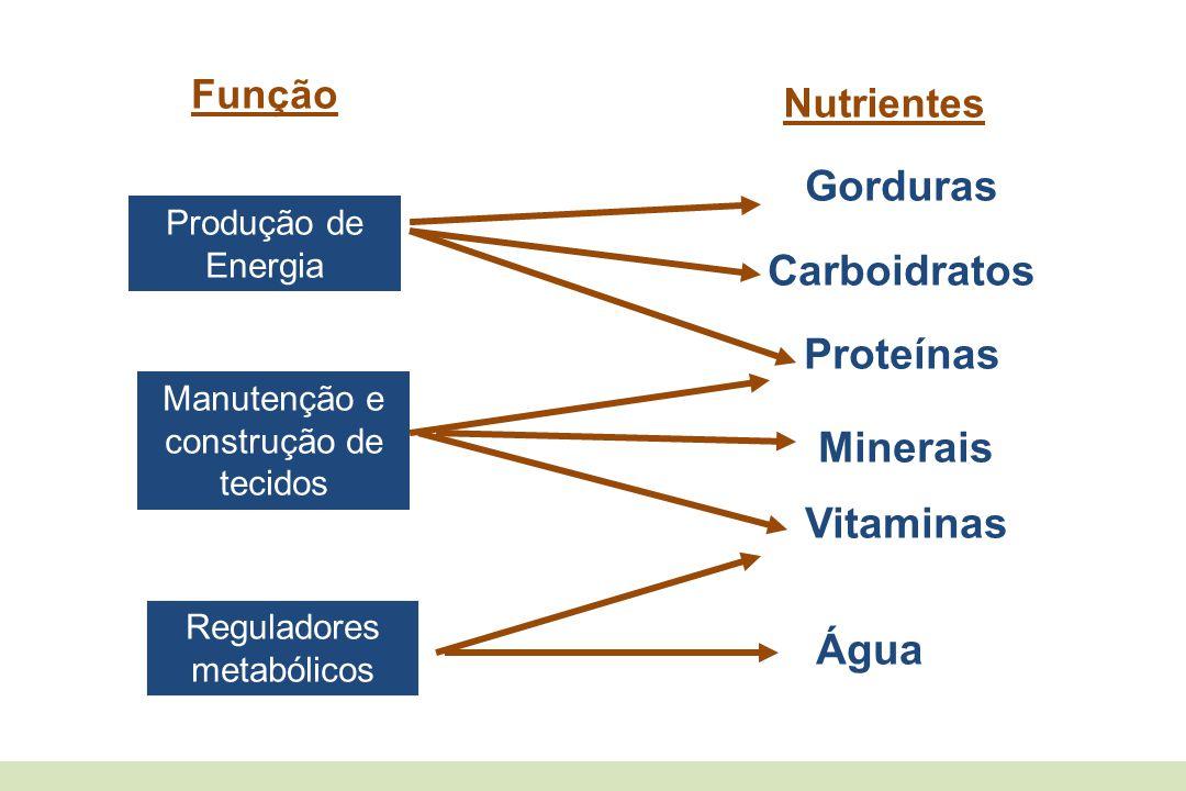 Gorduras Carboidratos Proteínas Minerais Vitaminas Água Função