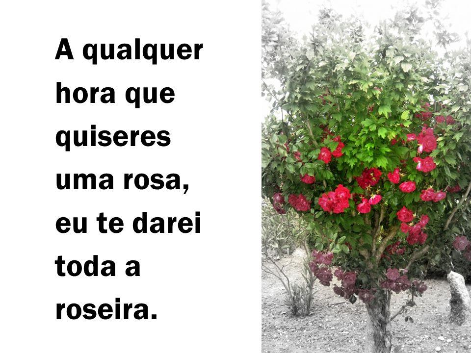 A qualquer hora que quiseres uma rosa, eu te darei toda a roseira.