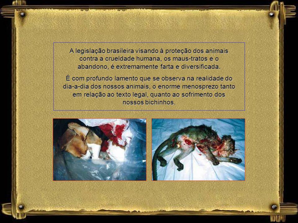 A legislação brasileira visando à proteção dos animais contra a crueldade humana, os maus-tratos e o abandono, é extremamente farta e diversificada.